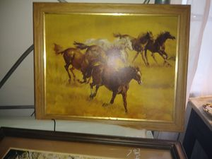 Horses for Sale in Warner Robins, GA