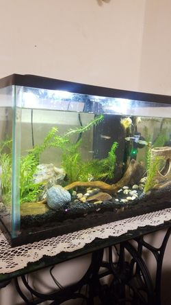 20gal tank for Sale in Maryville,  TN