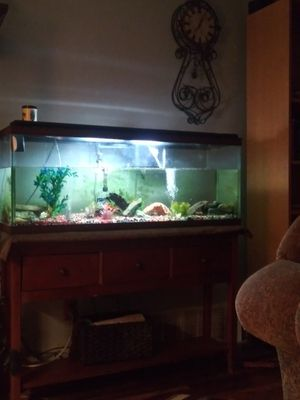 55 gallon Aquarium/everything for Sale in Lake Forest Park, WA