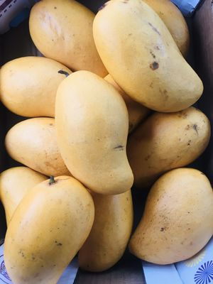 Mangos Gandes Mangos Dulces for Sale in Houston, TX