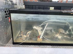 150 gallon aquarium for Sale in Joint Base Andrews, MD