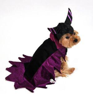 Anit Maleficent Wicked Dark Fairy Dog Halloween Costume Medium for Sale in Corona, CA