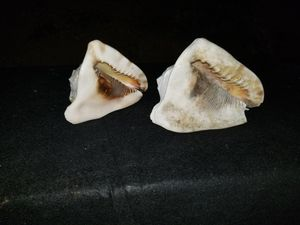 Shells for Sale in Corona, CA
