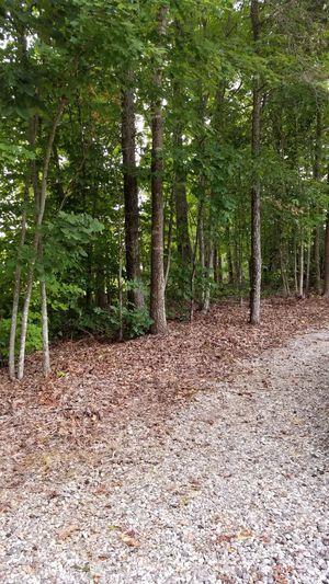 Free firewood for Sale in Keysville, VA
