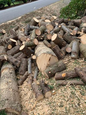 Free Wood Cypress Rounds for Sale in Kent, WA