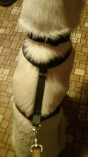 Dog Harness for Sale in Beaver Dam, WI
