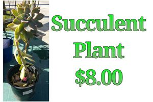 Succulent plant for Sale in Hacienda Heights, CA