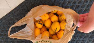 Organic Mangos 40 for Sale in Hollywood, FL