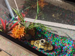 Fish Tank for Sale in San Antonio, TX
