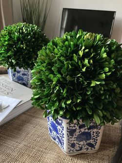 Two topiary plants with planters for Sale in Hinsdale,  IL