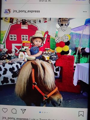 Pony rides for Sale in Riverside, CA
