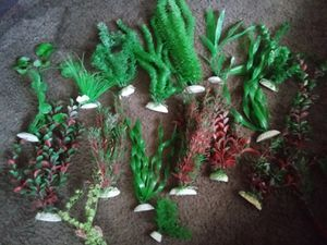 Aquarium plants for Sale in Hannibal, MO