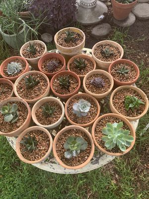 Various succulent plants. 10. Each. for Sale in Austin, TX