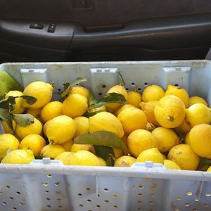 FRESH LEMONS for Sale in Lathrop, CA