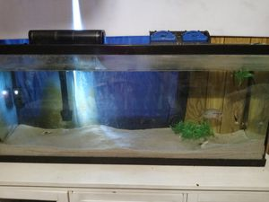 Fish tank for Sale in Auburndale, FL