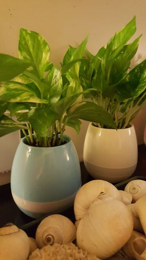 Bluetooth Plant Speakers -- Special Effects for Sale in Boston, MA