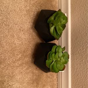 Artificial Succulent Plants for Sale in Henderson, NV