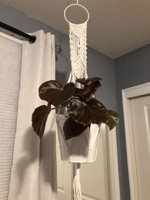 Macrame Plant Holders for Sale in North Las Vegas, NV
