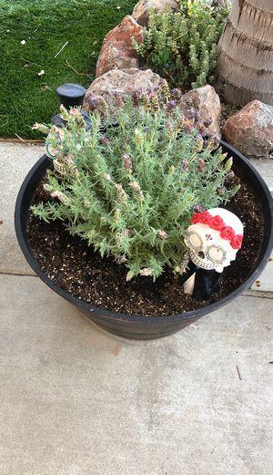 Plants for sale W/ Pots for Sale in Oakley, CA