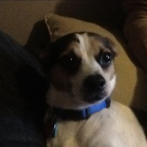 Lost Dog Sw 61st By Miller Okc for Sale in Oklahoma City, OK