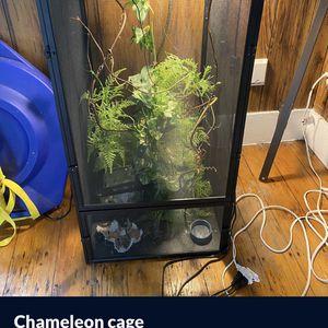 Camaleon Cage for Sale in Boston, MA
