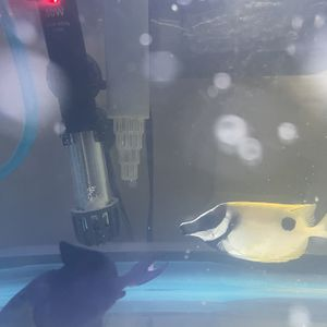 Fish Tank Saltwater for Sale in Sylmar, CA