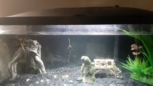 Fish tank and shelf for Sale in Columbus, OH