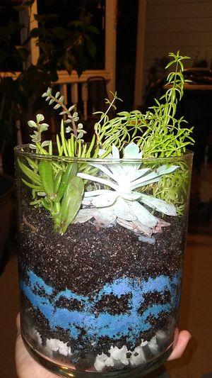 Large succulent terrarium for Sale in Covington, GA