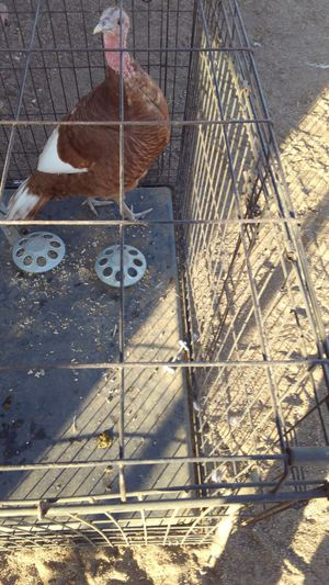 Large Bird cage for Sale in Norco, CA