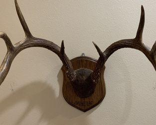 Mounted Deer Antlers for Sale in Newport Beach,  CA