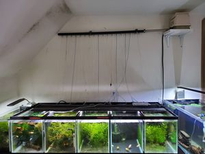 Full Guppy breeding setup aquarium fish tanks for Sale in Lynnwood, WA