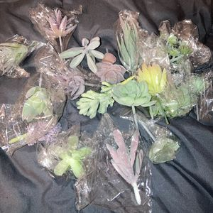 Faux Succulents for Sale in Smyrna, TN