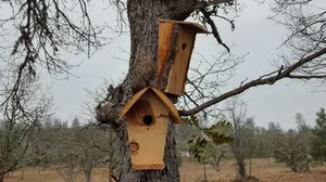 2 Birdhouses for Sale in Eagle Point, OR