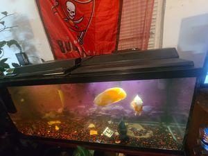 65 gallon fish tank w fish (Oscar's) for Sale in Tampa, FL
