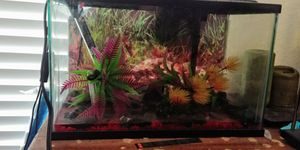 5 Gal. LED fish tank whole set up! for Sale in Sunnyvale, TX
