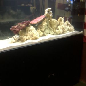 120 gallon Acrylic Running Salt Water Fish Tank Aquarium for Sale in Pomona, CA