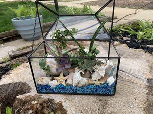 Live Succulent Terrarium for Sale in Columbia, MD