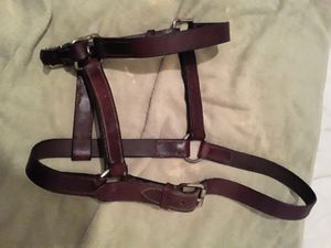 Leather show halter for Sale in Burleson, TX