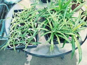 Plant starts for Sale in Pasco, WA
