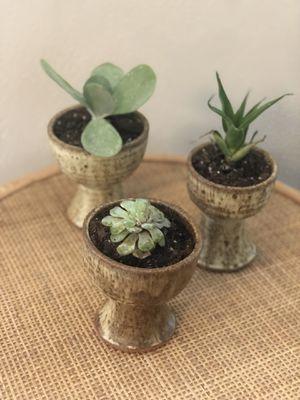 Set of 3 succulents + mid century pedi stool pottery planters for Sale in Virginia Beach, VA
