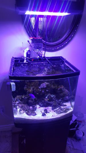 28g Nano Tank Fully Set Up Saltwater Tank w/ Lots of Accesories and Supplements for Sale in Norwalk, CA