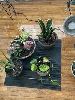 Pothos, snake plants, dracaena, bamboo, ferns... for Sale in Columbus,  OH