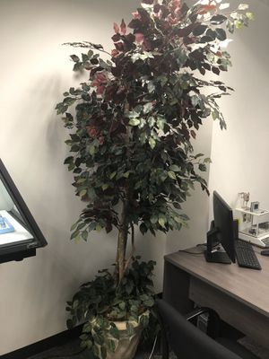 Office Plants for Sale in West Covina, CA