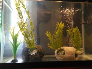 Fish Tank Decor and Accessories for Sale in American Canyon, CA