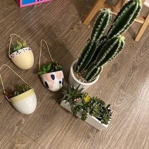 Cactus Decor for Sale in West Covina, CA