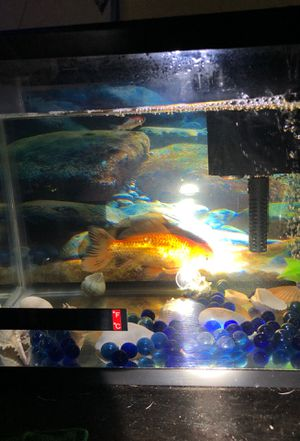 Fish tank with fish and accessories for Sale in Phoenix, AZ