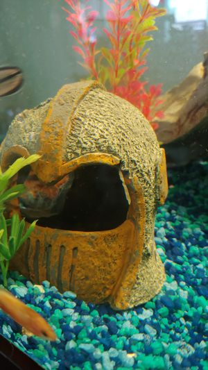 Helmet fish tank for Sale in Glendale, AZ