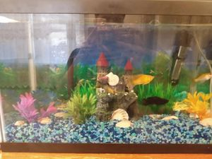 10 gallon fish tank for Sale in Akron, OH