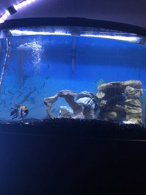 55 Gallon Fish Tank for Sale in Mount WASHING, OH