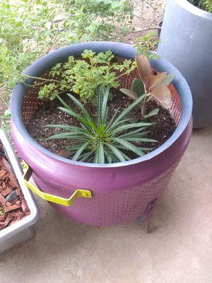 Gorgeous arrangement - Madagascar , Blue Hibiscus, & a succulent for Sale in Glendale, AZ